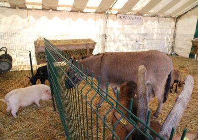 animaux-ane-cochon-chevre-ferme-foire-de-brignoles
