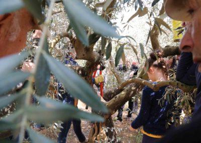 démonstrations-foire-de-brignoles-oliviers