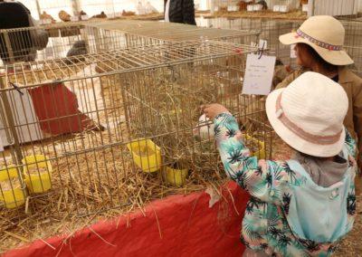 enfant-foire-de-brignoles-animaux-lapins-1